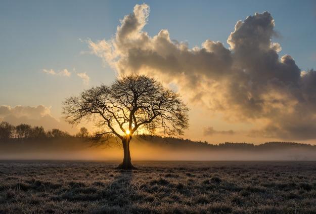 Mist Tree
